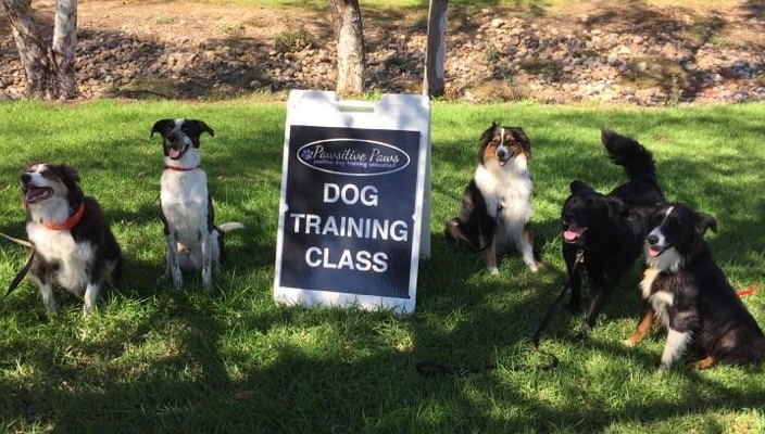 Pawsitive Paws Dog Training